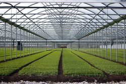 Exergen's non contact infrared temperature sensors help ensure accurate results in horticultural research