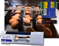 Zemic loadcell and weight transmitter used for egg weighing machine